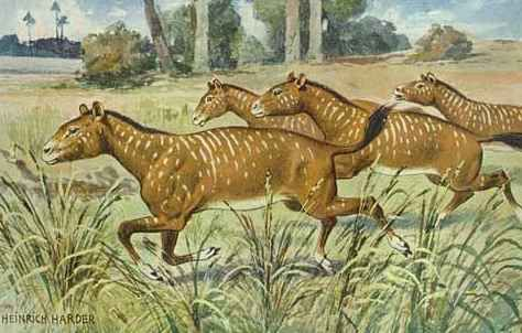 Reconstruction of Mesohippus bairdi - An Oligocene horse