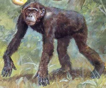 Reconstruction of Dryopithecus Fontani