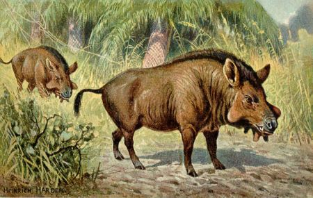 Elotherium  entelodon, a now extinct wild pig species from the Miocene