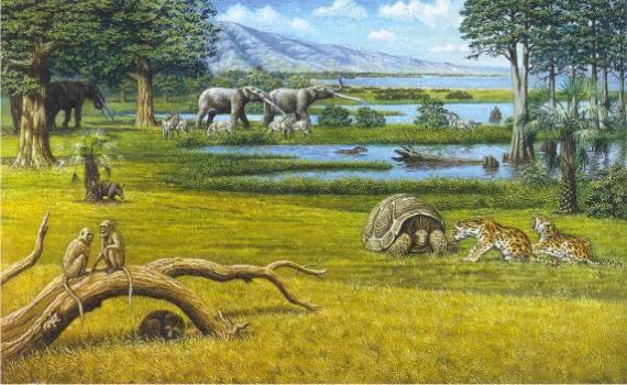 Reconstruction of the Pliocene landscape