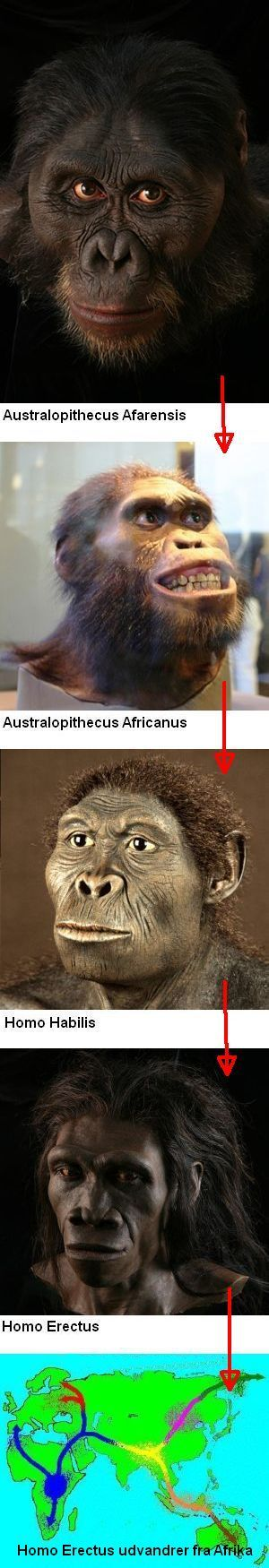 The family Homo  evolved in Africa