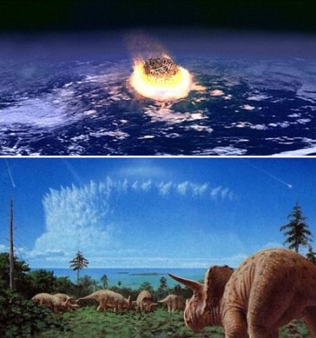 The dinosaurs were  wiped out by a large meteor