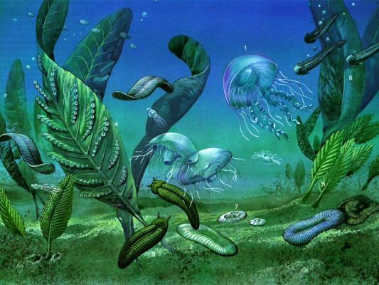 An artistic  reconstruction of the ediacarane fauna on the seabed