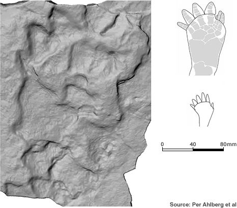 Fossilized footprints from the Devonian period