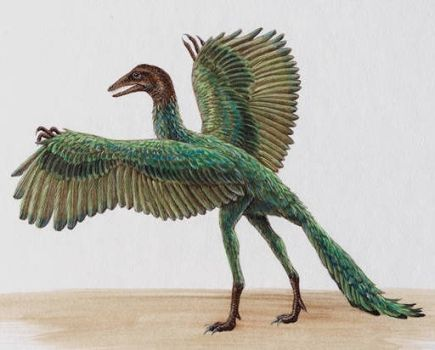 Reconstruction of  Archaeopteryx lithographica