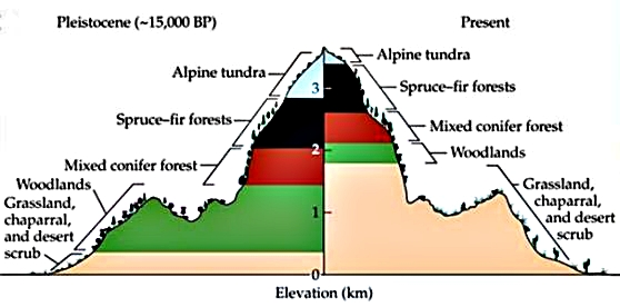 Climatic belts on  mountain slopes in Pleistocene and the present.